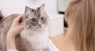 داء القطط